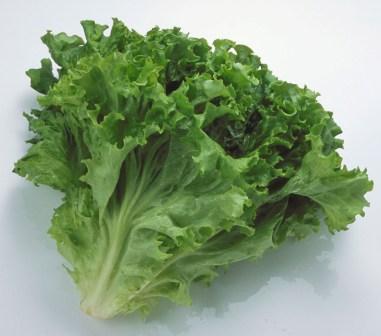 犬に与える「健康にいい野菜10種」の正しい与え …
