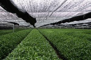 全国有数の生産量を誇る「あいちの抹茶」をPR!  ~知事に「あいちの抹茶」を届けます~Original text